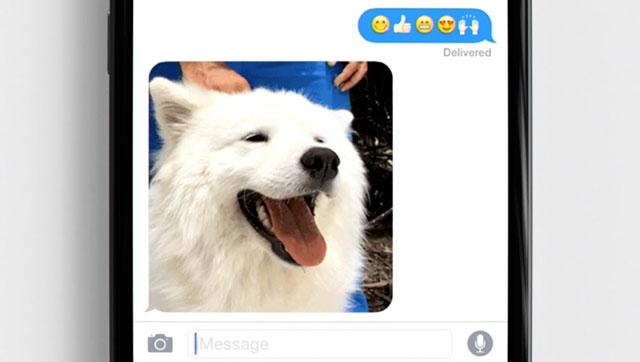 米国版「Loved」の犬