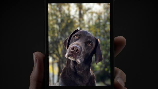 Portrait Mode + iPhone 7 Plus – Soul Mate
