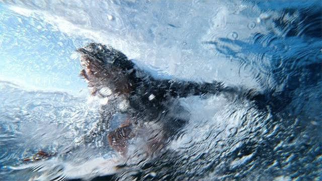 Apple Watch Series 3 — Surfing