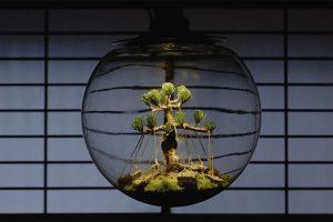 Photo Lab:村瀬貴昭と発見する盆栽の未来形