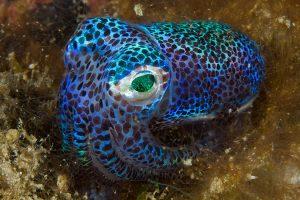 アートラボ - 子ども向け:日比保史と一緒に海洋生物を想像しよう