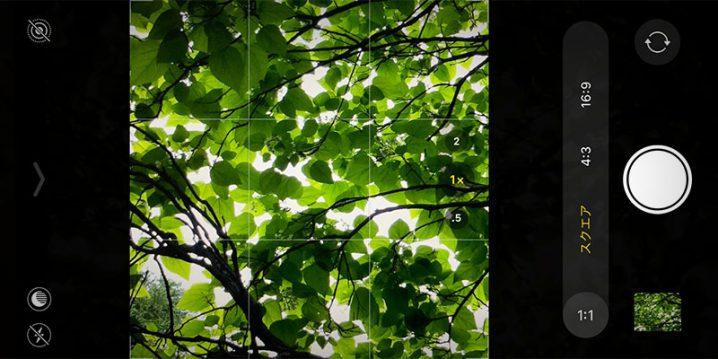 iPhone 11/11 Proの、正方形での写真撮影